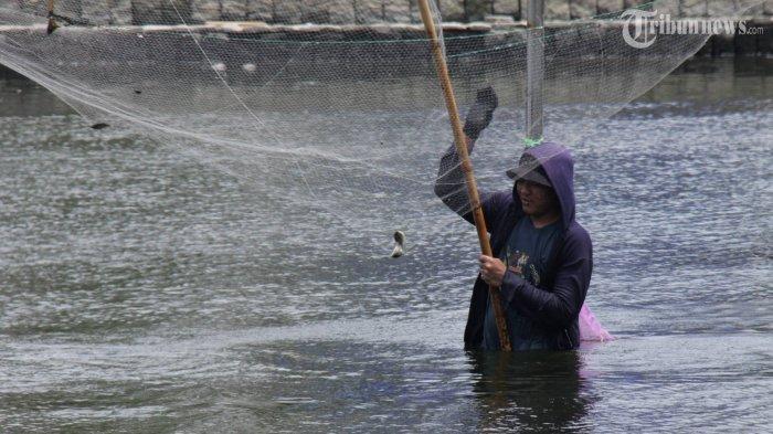 Warga Berebut Ikan Mati di Sungai Blumai Deliserdang