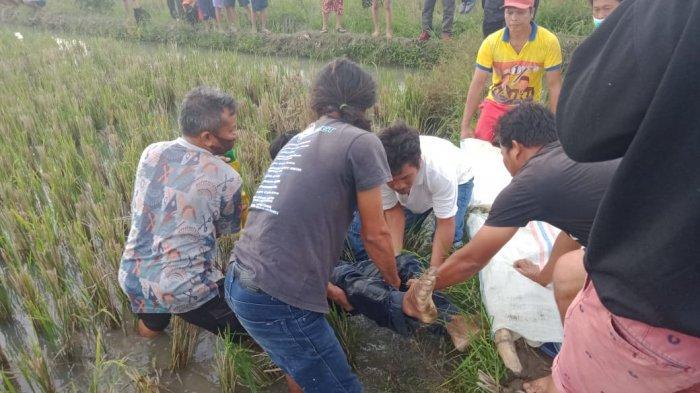 Kampung Matio Siantar Geger, Seorang Pria Tua Ditemukan Tewas di Sawah