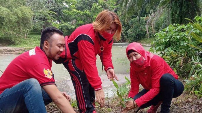 KADER PDI Perjuangan Kota Pemangsiantar menanam pohon di aliran DAS Bah Bolon, Minggu (23/1/2021).