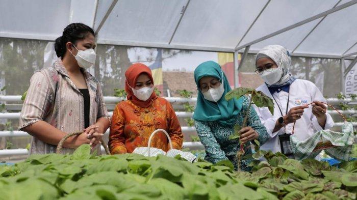 Resmikan Green House Hidroponik, Kahiyang Ayu Puji Kreativitas Camat Medan Johor