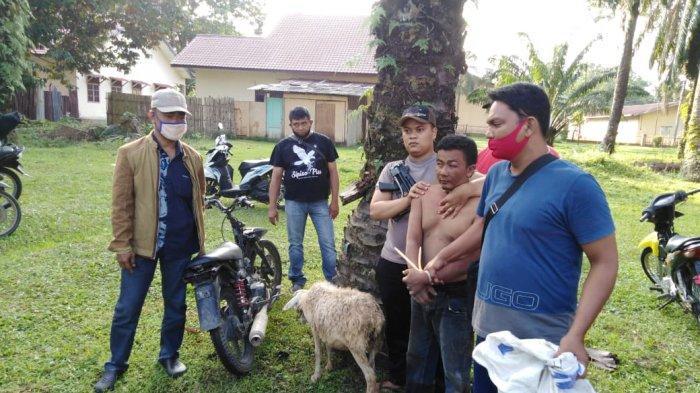 Niat Mencuri Kambing Gembel di Silau Kahean Kandas, Taufik Justru Ditangkap Polisi