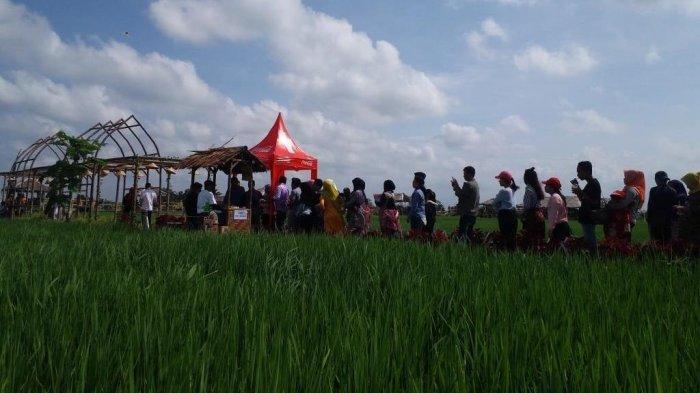 Liburan Tahun Baru Pengunjung Serbu Kampung Wisata Sawah Nuansa Alam Di Deliserdang Tribun Medan