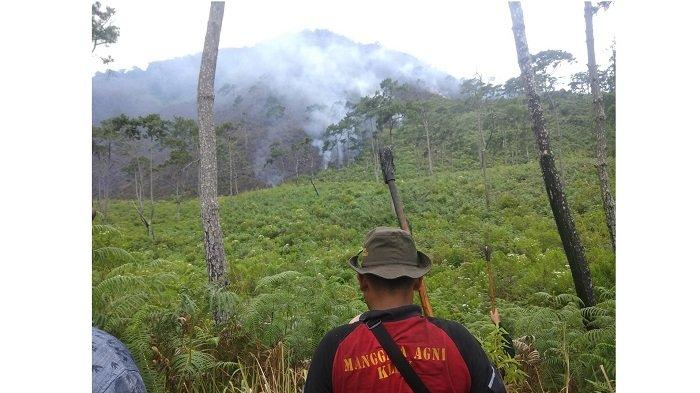 Kebakaran di Gunung Sipiso-piso, Petugas Pemadam Berjibaku dengan Angin Kencang