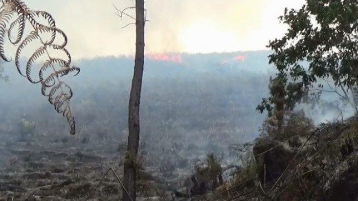 Kebakaran Lahan di Kecamatan Pangururan, Permukiman Warga Nyaris Terbakar