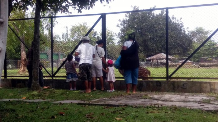 Habiskan Waktu Akhir Pekan, Nikmati Wisata Murah Meriah di Kebun Binatang Mini