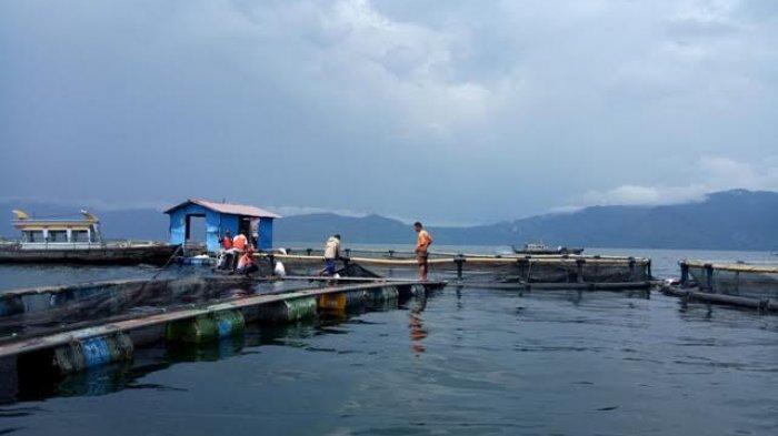 Pemprov Sumut Gandeng Polda dan Pangdam untuk Kurangi KJA Danau Toba, PT Aquafarm Bilang Begini