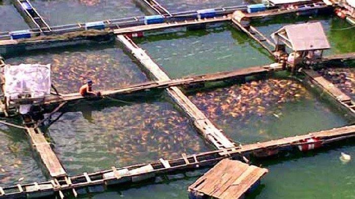Istilah Upwelling, Penyebab Ratusan Ton Ikan Keramba Jaring Apung di Danau Toba Mati Tiba-tiba