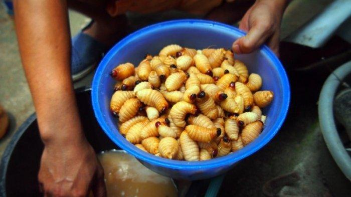Lezatnya Kidu-Kidu, Kuliner Karo yang Terbuat dari Ulat Enau