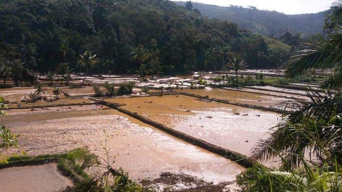 150 Hektar Persawahan dan 60 Hektar Perkebunan Rusak Akibat Banjir Bandang Dairi