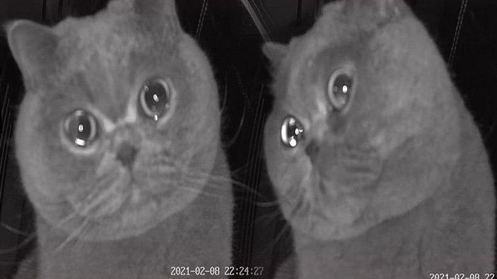 Seekor kucing bernama Fu Fu menangis saat ditinggal majikan pergi liburan