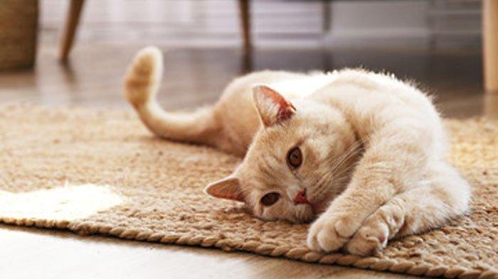 Arti  Sebenarnya Mimpi Seputar Kucing, Dari Dicakar hingga Melihat Kucing Hitam