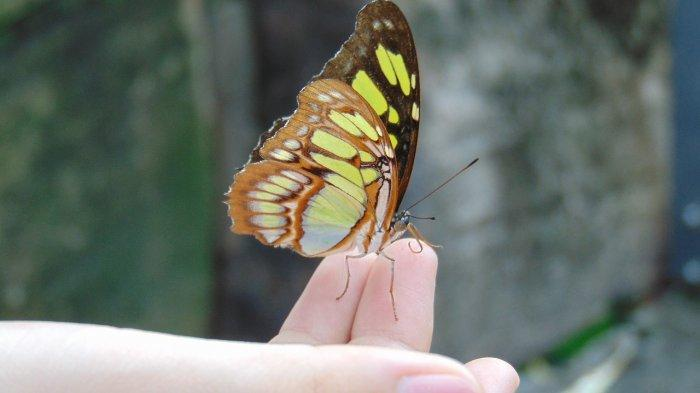 Arti Kelelawar, Kupu-kupu, Ular, hingga Katak Masuk ke ...