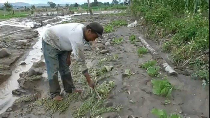 Dampak Banjir Lahar Dingin, Lahan Pertanian di Desa Sukatendel Rusak