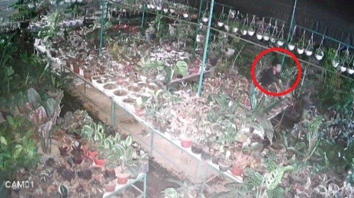 Laporan Pencurian Tidak Ada Kejelasan, Maling Beraksi Lagi Bikin Pengusaha Bunga Rugi Belasan Juta