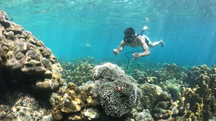 Memegang tali untuk tetap menyelam di bawah air, nikmati berenang bersama Ikan Nemo dan Anemon Laut