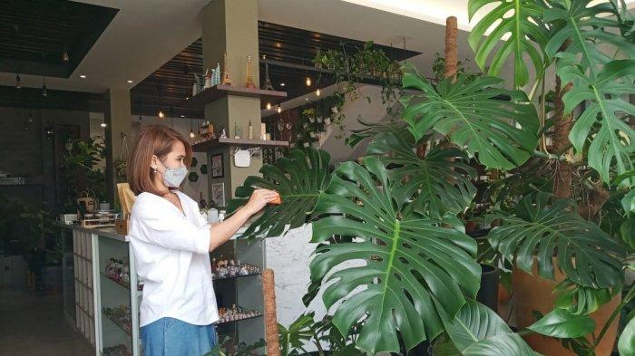 Kegiatan Positif Hobi Tanaman Hias Lewat Green Dotty Botanical Gallery & Art