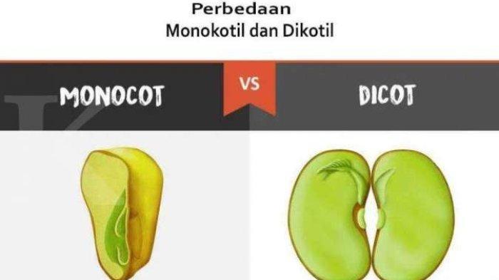 Monokotil dan Dikotil