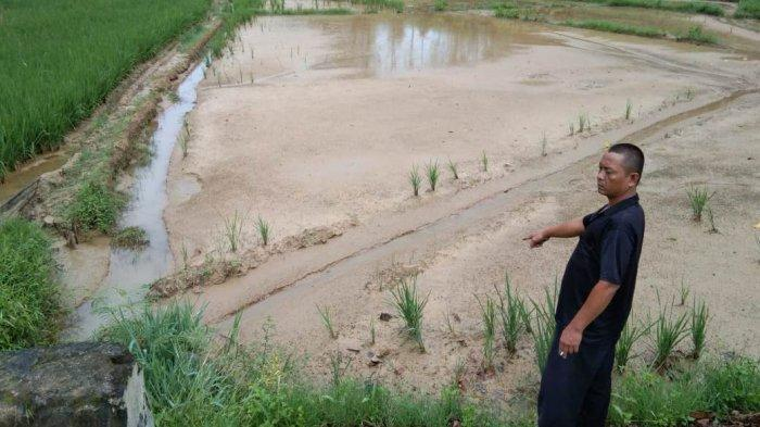 Biaya Ganti Rugi dari Pemkab Dairi Tak Kunjung Cair, Petani Ini Tak Bisa Lagi Bersawah