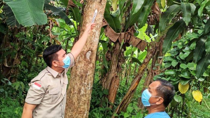 Biaya Nikah Terlalu Besar, Calon Pengantin Akhiri Hidup di Pohon Duku