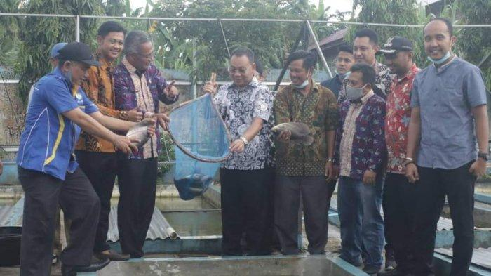 Peternak Ikan Binjai Lakukan Inovasi Budidaya Patin, Gurami, dan Lele