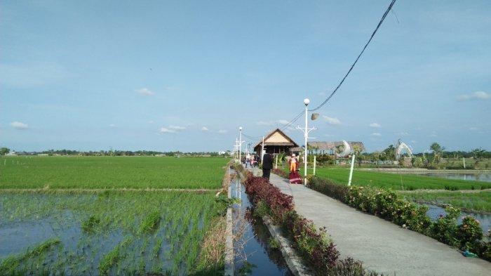 Nikmati Keindahan Kampung Wisata Sawah Pematang, Tiket Masuk Hanya Rp 5 ribu