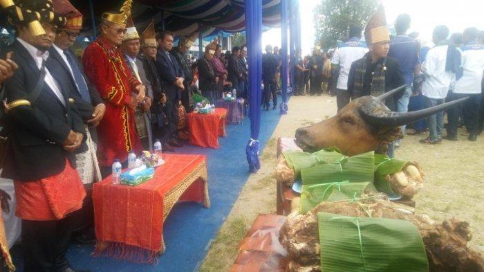 Makan Bersama, Masyarakat Adat Persembahkan Kepala Kerbau Melepas JR-Ance ke Pilgub Sumut