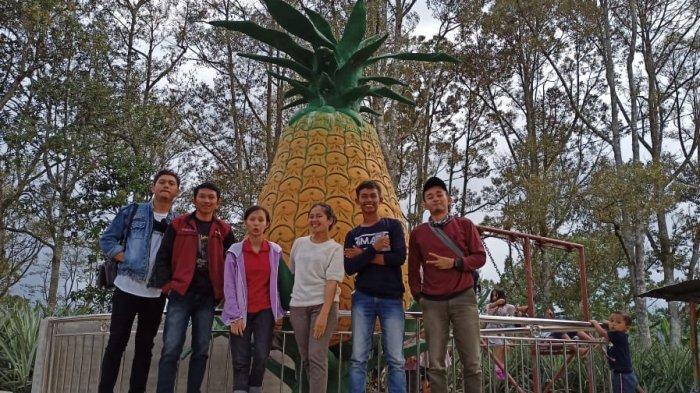 Nikmati Kelezatan Buah Nanas di Tempat Wisata Parhonasan Daihonas Dairi