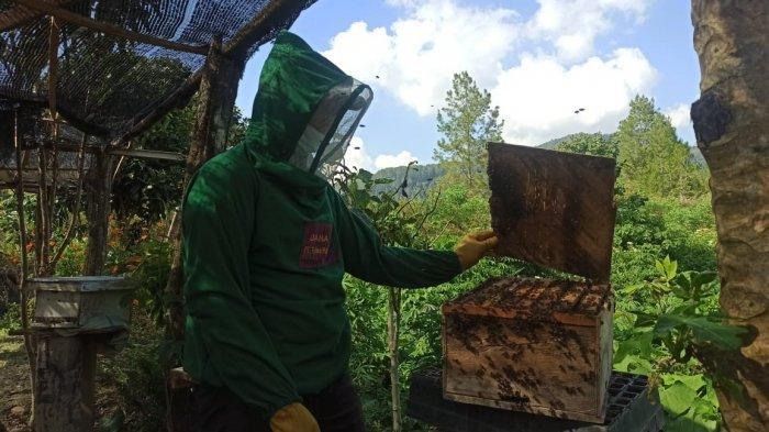 Madu Situak Ni Loba, Wisata Madu Hutan di Desa Aek Natolu Jaya Toba