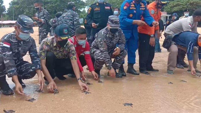 Pelepasan tukik di Pulau Jemur oleh TNI Angkatan Laut Tanjungbalai Asahan.