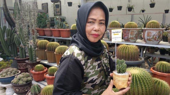 Peluang Bisnis Budidaya Kaktus Mini Target Pasar Generasi Milenial Tribun Medan