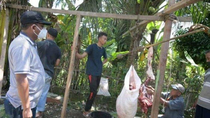 Pemkab Sergai Bagikan 89 Ekor Lembu dan Dua Kambing ke 17 Kecamatan