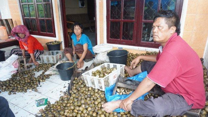 Petani Kolang-kaling Genjot Produksi, Sempat Yakin Bakal Tak Laku Akibat Covid-19