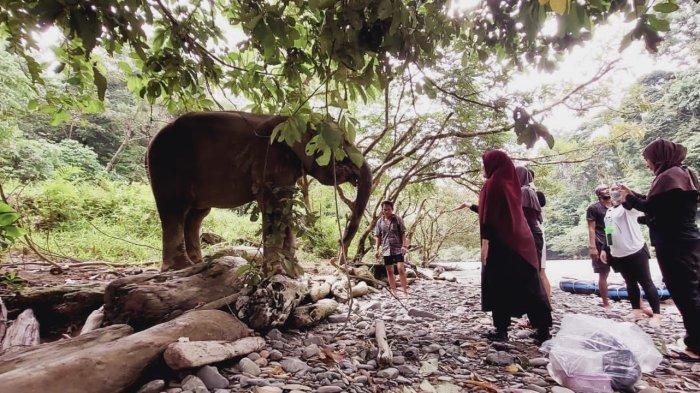Tangkahan, Tempat Wisata yang Cocok untuk yang Senang dengan Keindahan Alam