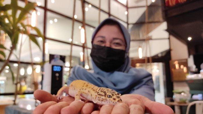 Pengunjung sedang memegang hewan reptil yang tersedia di KOHI 91diJalan Taruma No.9B, Petisah Tengah, Kecamatan Medan Petisah, Kota Medan, Sumatera Utara, Minggu (22/8/2021).