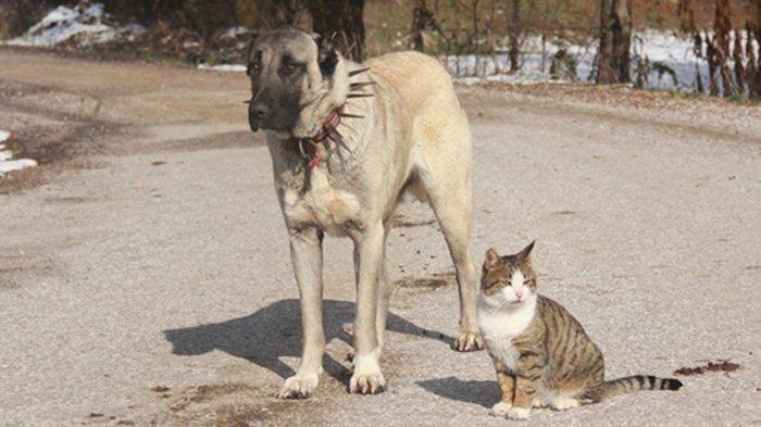 Cara Melatih Kucing dan Anjing Supaya Berteman
