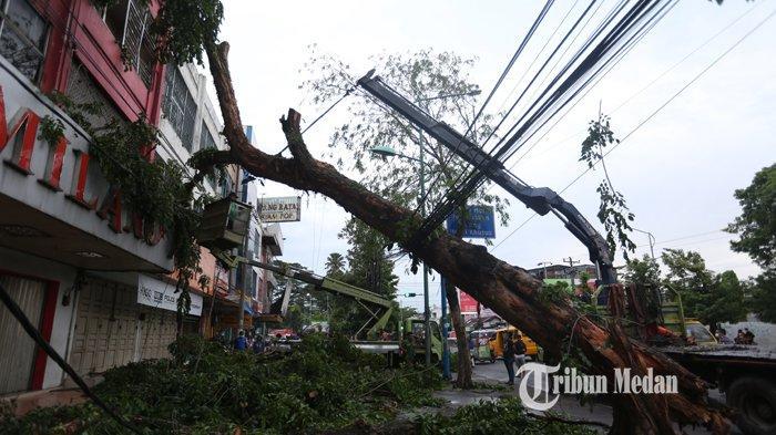 BERITA FOTO Beruntung, Pedagang Selamat Saat Pohon Angsana Tumbang dan Menimpa Ruko