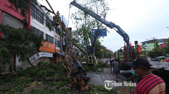 Petugas memotong batang pohon angsana yang tumbang di Jalan Gatot Subroto, Medan, Sumatera Utara, Minggu (20/6/2021). Pohon yang diperkirakan berumur belasan tahun tersebut tumbang akibat hujan deras disertai angin kencang melanda kota itu.TRIBUN MEDAN/RISKI CAHYADI