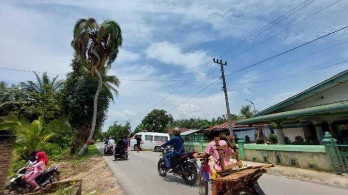 Pohon Kelapa Unik di Desa Naga Kesiangan Ini Mirip Tubuh Ular, Jadi Obyek Foto Warga yang Melintas