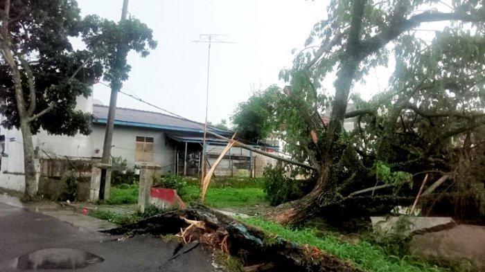 SIANTAR Darurat Pohon Tumbang, Sehari 25 Batang Roboh Karena Lapuk