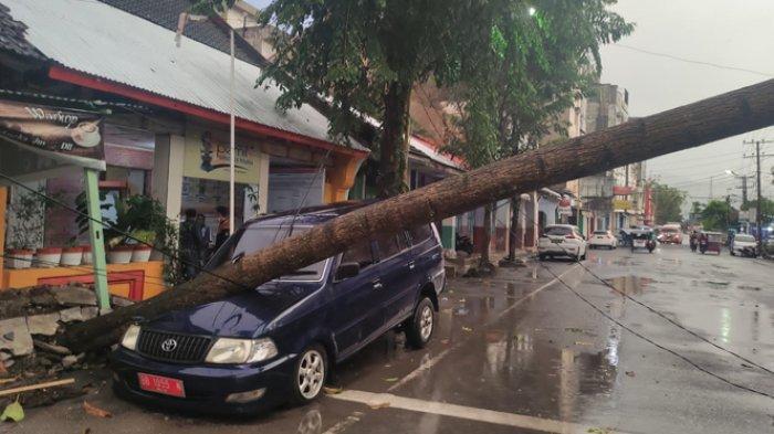 Hujan Deras di Sibolga, Pohon Tumbang Timba Mobil Komisioner KPUD