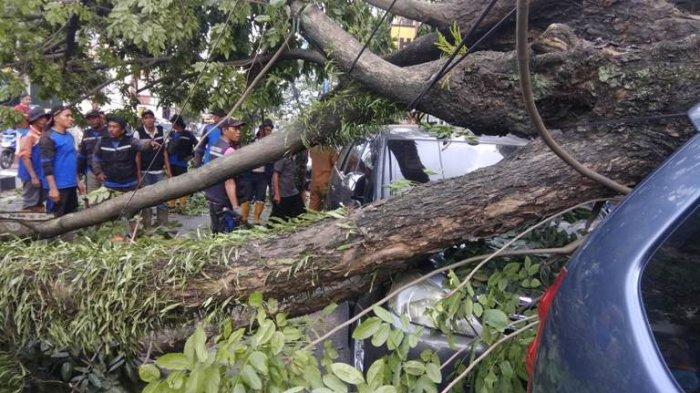Dinas Pertamanan Pangkas Pohon Mahoni untuk Cegah Pohon Tumbang di Seputaran Kota Medan