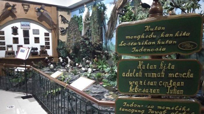 TFC PREMIUM: Mengenal Keanekaragaman Satwa di Rahmat International Wildlife Museum and Gallery