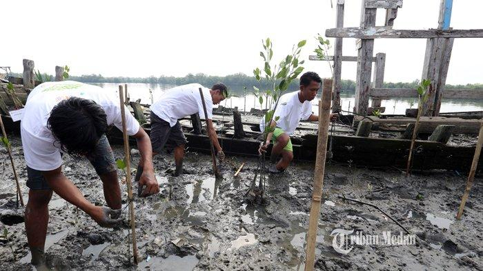 BERITA FOTO Untuk Mengurangi Erosi dan Penghijauan Pantai, Warga Tanam Bakau di Belawan - rehabilitas-hutan-mangrove-1.jpg