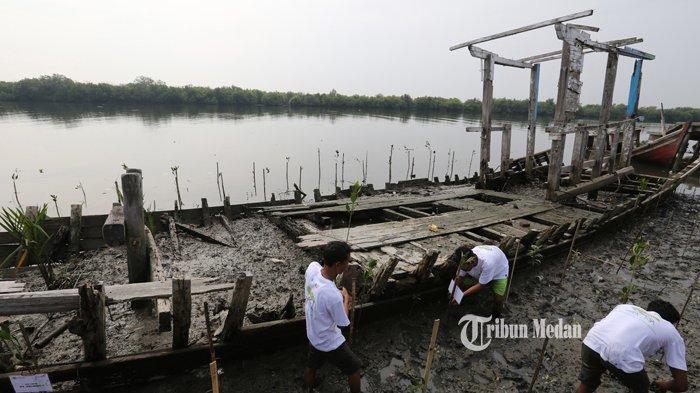 BERITA FOTO Untuk Mengurangi Erosi dan Penghijauan Pantai, Warga Tanam Bakau di Belawan - rehabilitas-hutan-mangrove-3.jpg