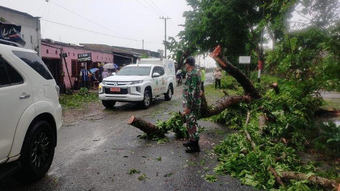Hujan Deras dan Angin Kencang Akibatkan 8 Rumah Rusak serta Pohon Tumbang di Galang