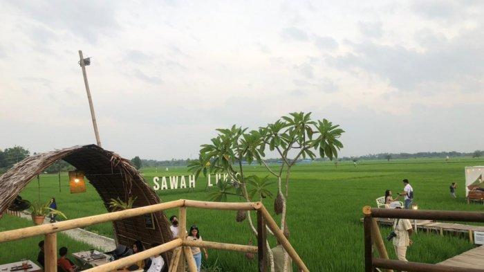 Sawah Lukis, Tempat Wisata di Kota Binjai, Bisa Santap Makanan di Tengah Persawahan