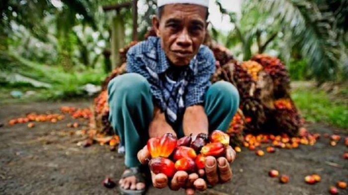 Indonesia Perkuat Citra Sawit di Eropa