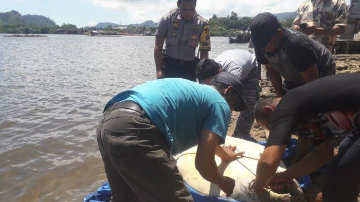 Sempat Tertangkap Nelayan di Tapteng, Komantab Kawal Pelepasan Penyu Berbobot 100 Kg ke Pantai