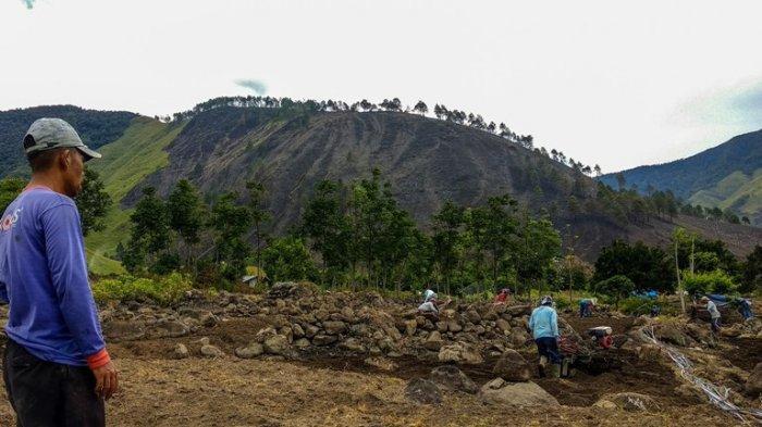Hutan Danau Toba di Desa Paropo Terbakar, Tiga Hektare Lahan Pertanian Warga Ikut Ludes