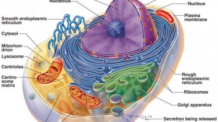 Materi Belajar Biologi SMA Kelas 11 : Mengenal Sel Pada Makhluk Hidup